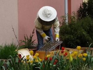 beekeeper-970216_640